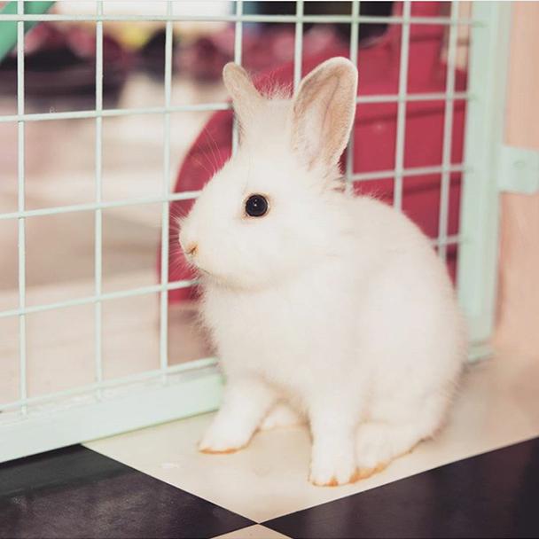 头像动物可爱萌小兔