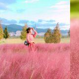【漢江必玩】少女心炸裂!漢江邊多了一片5000㎡的草地,還是粉色的哦~