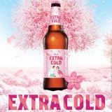 让单身狗羡慕死的Hite:春季限定樱花包装啤酒