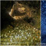 【京畿道.光明市】昔日黄金,今日红酒,2018年韩国观光百大景点:「光明洞窟」