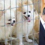 「救救小毛孩」!韩国超四分之一家庭养宠物,弃养数目却也逐年增多!