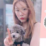 太妍愛犬ZERO與潮牌SPAO的合作款要來了!款式甄選投票中~