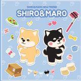 韩国超人气柯基SHIRO & MARO有新朋友啦,现在还在新村和大家见面呢!