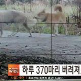 韓國實施加強版《動物保護法》, 遺棄及虐待動物者會被判罰款及監禁!