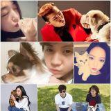 明星家的貓貓狗狗也與眾不同? 盤點韓娛圈人氣星寵