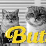 猫咪 cover BTS 防弹少年团《Butter》大获好评!观看人次已突破500万