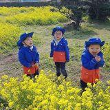大韓、民國、萬歲濟州島賞花中