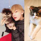 好巧啊!EXO、防彈少年團、Wanna One都有一隻叫「碳」的寵物