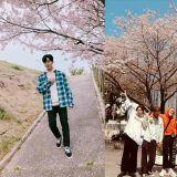很多明星都和櫻花拍照打卡了,大家也賞櫻花了嗎?