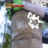SJ利特挑戰摘椰子,爬上滿是螞蟻的椰子樹
