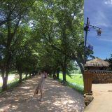 慶尚北道歷史之都:擁有獨特文化的安東之旅(下)
