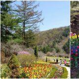 【京畿道.加平】沉浸在大自然的山林浴,花與樹的藝術庭園──晨靜樹木園
