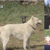 《森林裡的小屋》與「朋友」再次相逢的蘇志燮 狗狗這次接受他的心意了嗎?