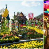 【春季限定】大人與小孩共享的夢幻樂園──愛寶樂園鬱金香節!