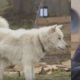 《森林里的小屋》被打击到的「实验对象B」苏志燮 和狗狗的互动太可爱了~