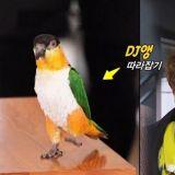 《Running Man》来宾朴荷娜带爱宠上节目,展示会跟著EDM音乐跳舞的鹦鹉!