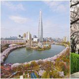 【春天限定】春暖花開賞櫻去~首爾兩大櫻花慶典4月登場!