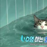 「喵的,老子才不怕水!」你看过爱游泳的猫吗?