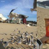 【釜山景點】釜山海邊最浪漫的活動之一?一起來餵海鷗吧~
