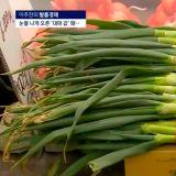 韩国葱价猛涨1kg卖₩7400,民众直呼买不起!各网友在家中自种大葱网上交流心得