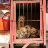 營業近70年,韓國最大狗肉市場終於停業! 原址將建設動物福利設施