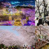 櫻花季預備!照著櫻花預測圖訂機票吧~