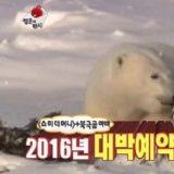 《无限挑战》郑俊河为了完成幸运信任务 前往加拿大去见北极熊啦!