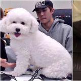 EXO世勋爱犬VIVI瘦身成功 又成为热门话题了!