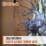 世上竟有32条腿章鱼!韩媒:渔民都是生平首见,遭质疑核污染