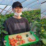 BTS 防弹少年团 SUGA 分享采草莓大笑照,网友:看来草莓要热销了~