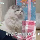《一日三餐》猫儿Kong和Mong的乐玩「无穷花开」