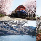 韓國【賞櫻熱門三大景點總整理】怎麼拍都美美的!這些點你可千萬別錯過啊~