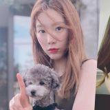 SM申請太妍愛犬ZERO的商標權   是要製作周邊了嗎?