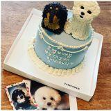 這對情侶到底有多愛狗狗?鄭敬淏為寵物狗「淏英」與「愛鳳」訂製蛋糕:「要長長久久在一起唷!」