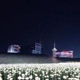 东大门DDP玫瑰花灯海真的是常态展,美丽模样依旧绽放