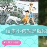 【K社韩文小百科】忠诚勇猛被用於赠送国家领导人,这就是韩国的国犬——珍岛犬