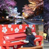 这个樱花庆典不只有樱花,还有情侣跑、马巡游、花市、拍照区等体验活动!