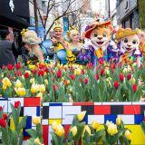 愛寶樂園由3月16日開始:為期44天的「鬱金香季」