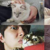 李民基演活了「超萌工科男貓奴」,而說到養貓的男演員裡,你會先想到誰呢?