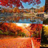 又到一年赏枫季啦!10月首尔最美秋色都在这里了