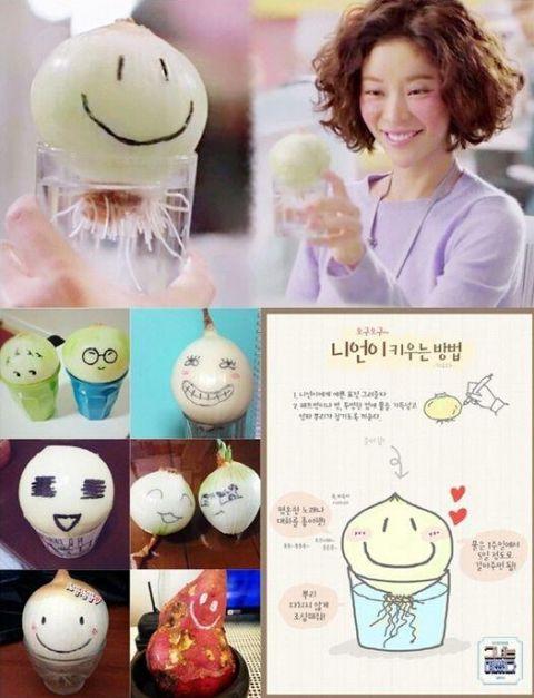 澳门博彩官网韩国刮起养洋葱风 「今天你养洋葱了吗?」