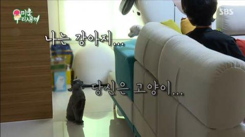 《我家的熊孩子》李常敏想到崔振赫家「蹭住」,极力撮合自己的猫和崔振赫的狗