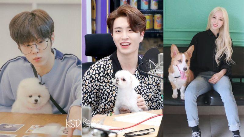 MBC中秋特輯節目:愛豆帶著伴侶犬進行比賽!金宇碩、GOT7榮宰、MAMAMOO玟星等人出演!