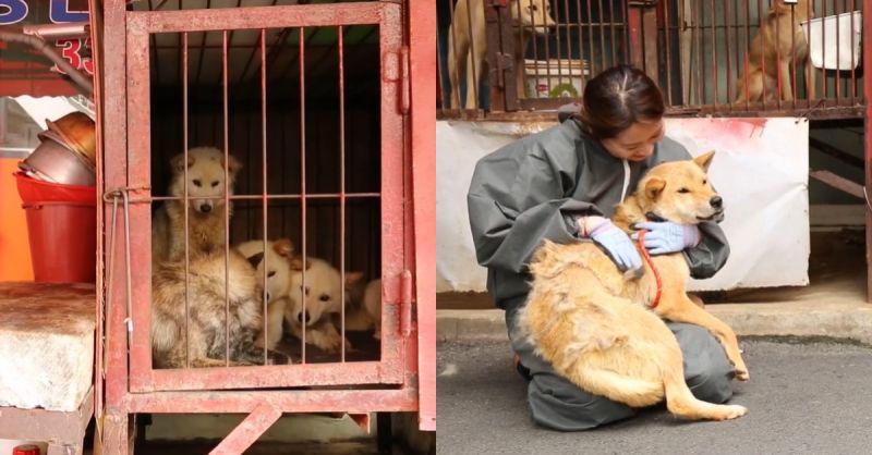 营业近70年,韩国最大狗肉市场终於停业! 原址将建设动物福利设施