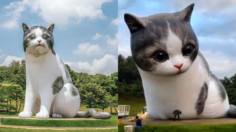 首爾奧林匹克公園多了兩只「巨型貓咪」,到夜晚就是最亮的燈飾!