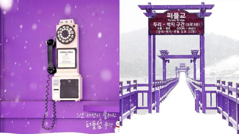 这里会是紫色控的天堂:韩国的Purple Island爆红!