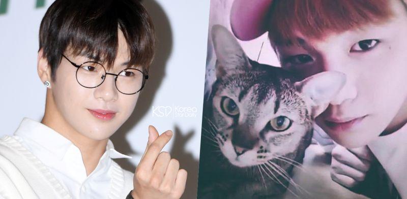 网友学姜丹尼尔与轻抚猫咪头顶,结果太出人意料!