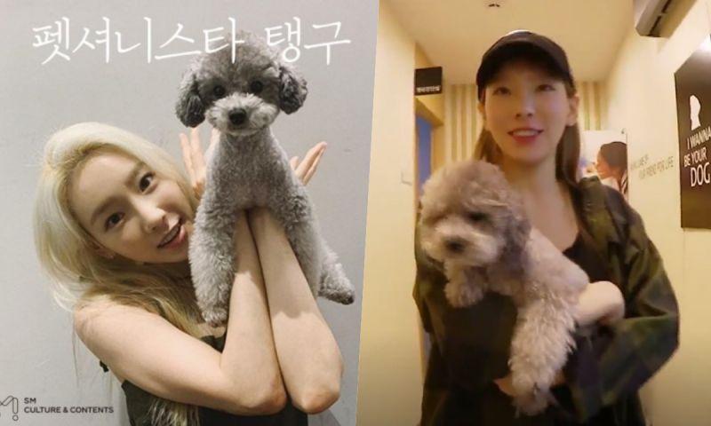 太妍与宠物犬一起出演真人秀《Petionista Taengoo》 今日播出特别篇!