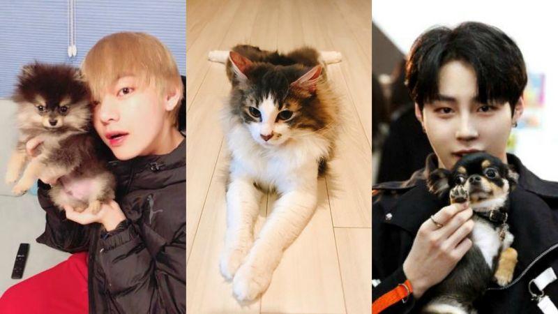 好巧啊!EXO、防弹少年团、Wanna One都有一只叫「碳」的宠物