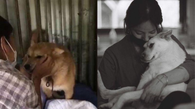 人美心也美!李孝利为流浪狗领养请求帮助:「虽然现在都处於困难时期,如果可以提供帮助的人...我会等你的」